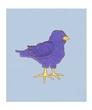 Personalized Baby Blue Birdie Panne Leo